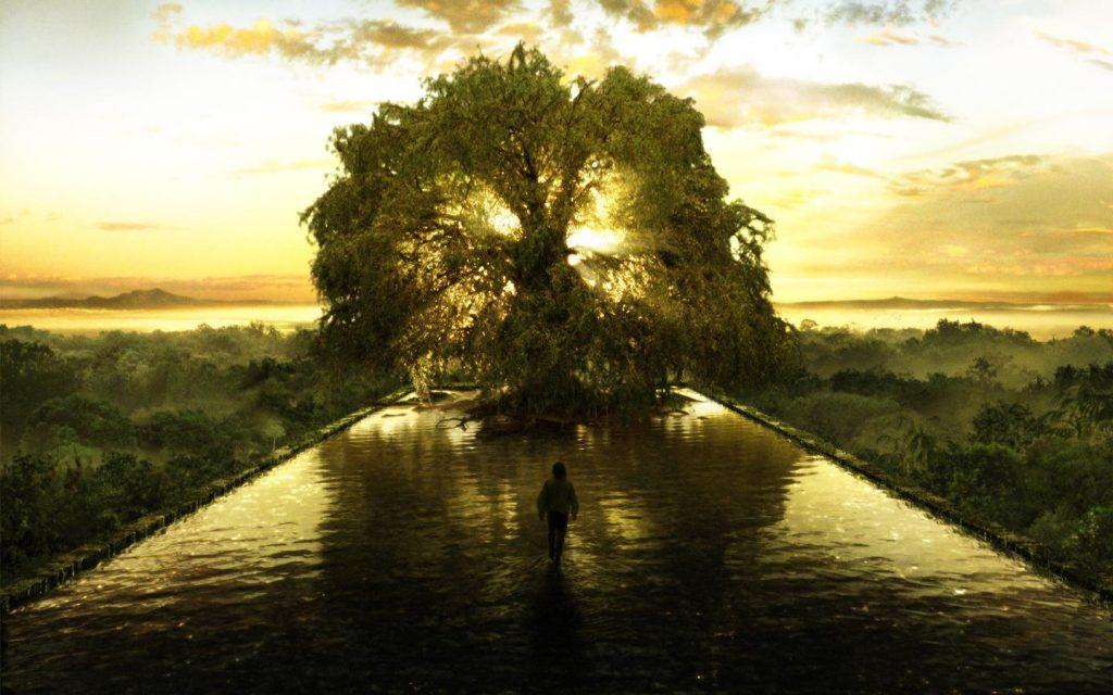fa 1024x640 - Mikor születtél? Megmutatjuk, milyen fa vagy, és milyen tulajdonságok jellemeznek!