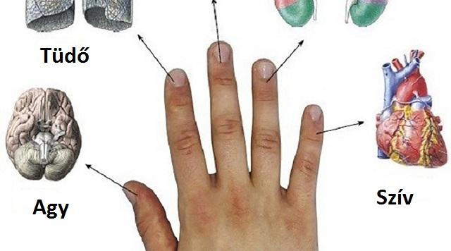 szervünkkel - Minden ujjunk két szervünkkel van szoros kapcsolatban! Ismerd meg a japán öngyógyító módszert!