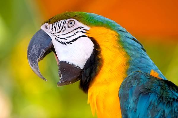 madárhoroszkóp - Születésed időpontja az inka bölcs madárhoroszkóp szerint ezt fedi fel rólad! Ennél pontosabbat még nem olvastunk!