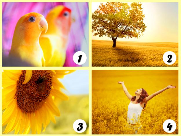 arany színű képek - Válassz egyet a reggeli képek közül, és nézd meg mit árul el rólad! Nekünk bejött, Neked is tetszeni fog!
