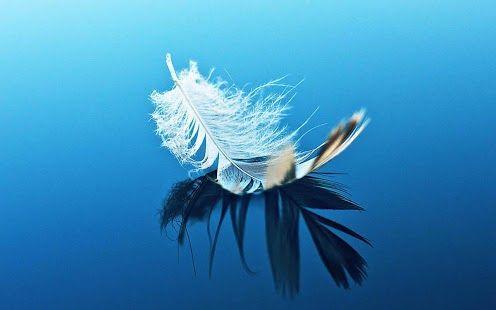 feather - Angyali üzeneted péntekre: - a legerősebb égi jelet kaptad most - Megérzéseiden keresztül Isten és az angyalok szólnak általuk!