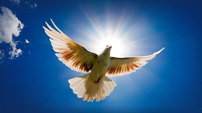 védelmezlek3 - Angyali szerda éjszakára: A béke időszaka van, biztosítom számodra a nyugodt, zökkenőmentes időszak eljövetelét
