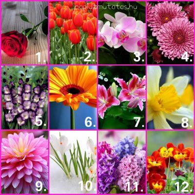 virágfajtára - Nekünk nagyon bejött! Egyperces személyiségteszt: bökj egy virágfajtára, elmondjuk milyen vagy!