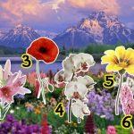 virágok 150x150 - Válassz ki egy virágot, cserébe adunk egy csodás bibliai üzenetet!