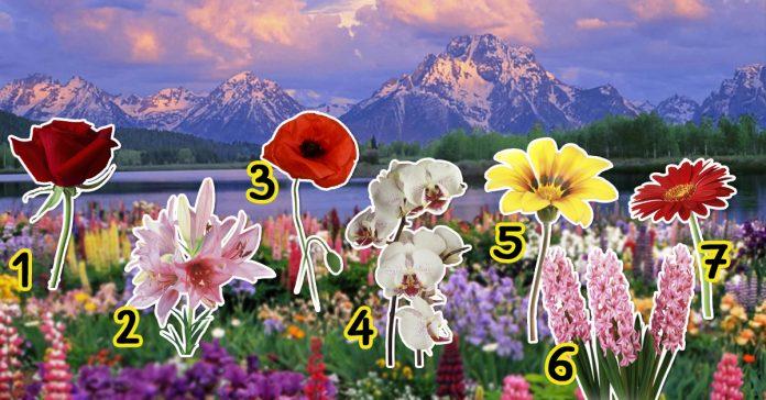 virágok - Válassz ki egy virágot, cserébe adunk egy csodás bibliai üzenetet!