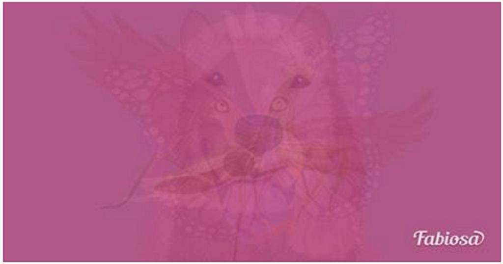 llat1 1024x538 - Melyik állatot látod meg először ezen a képen? A válaszod felfedi a lelked legmélyebb vonásait!