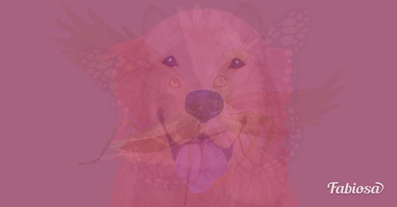 llat5 - Melyik állatot látod meg először ezen a képen? A válaszod felfedi a lelked legmélyebb vonásait!