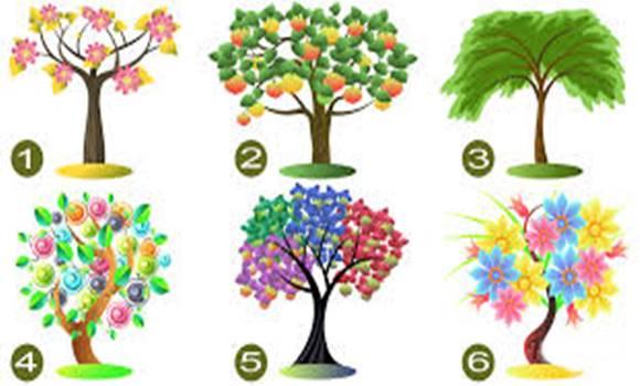 számodra - Válassz egyet az élet 6 fája közül és tudd meg mit üzen számodra!