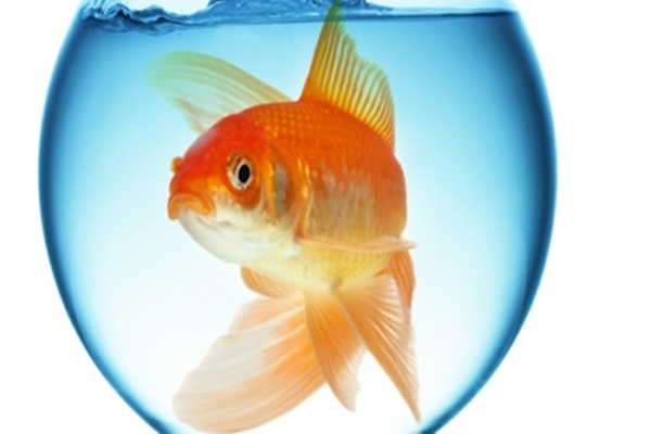 aranyhalad - Szerencsehozó aranyhalad ma teljesíti 3 kívánságod: ÍRD A KÉP ALÁ MIT KÉRSZ ÉS OSZD MEG, hogy valóra váljon!
