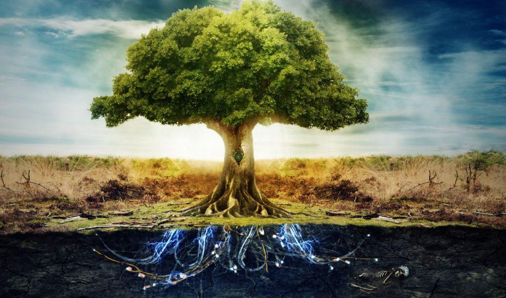 bőséggel1212 1024x603 - Orákulum jóslat a mai napra: Az élet fája ebben a pillanatban is áradó bőséggel tölti meg életünket.
