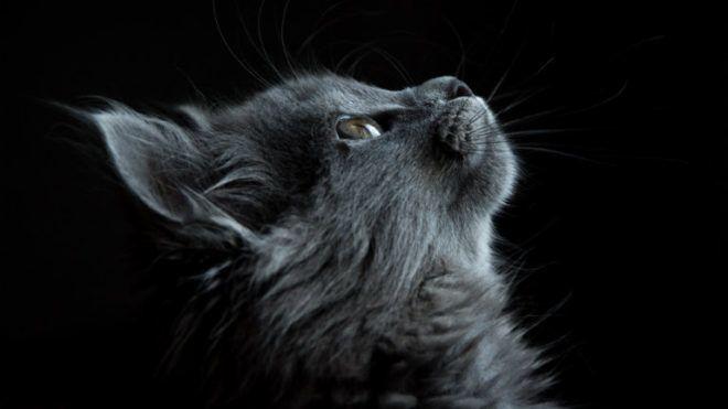 llatok - Amennyiben ezekkel az állatokkal álmodsz, a tudatalattid üzen!