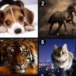 llatot 150x150 - Válassz egy állatot és tudd meg mit árul el a személyiségedről!