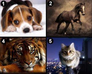 llatot 300x242 - Válassz egy állatot és tudd meg mit árul el a személyiségedről!