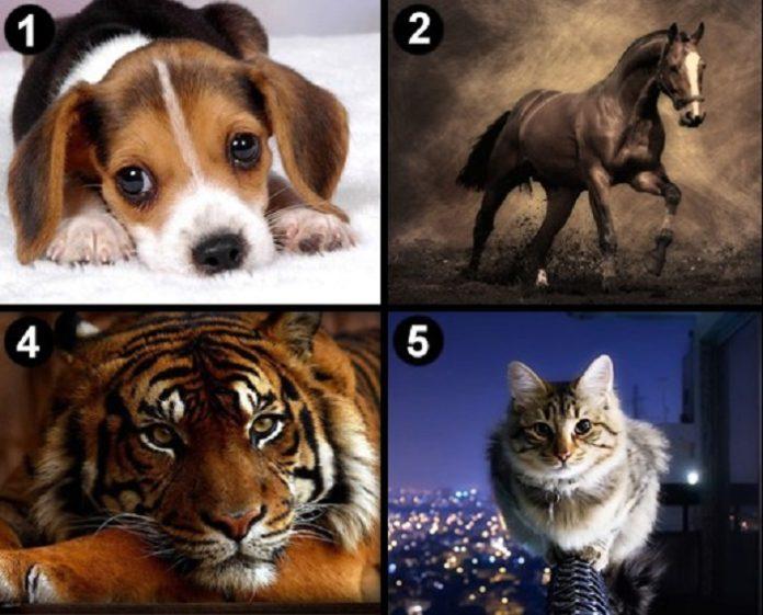 llatot - Válassz egy állatot és tudd meg mit árul el a személyiségedről!