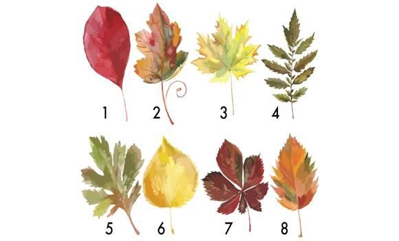 falevelet - Válaszd ki az egyik őszi falevelet, és felfedi neked, hogy mi vár rád az év végén