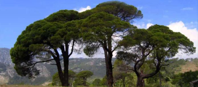 fa - A 3 fa története! 5 perc alatt elolvasod, de egész életedben emlékszel majd rá!