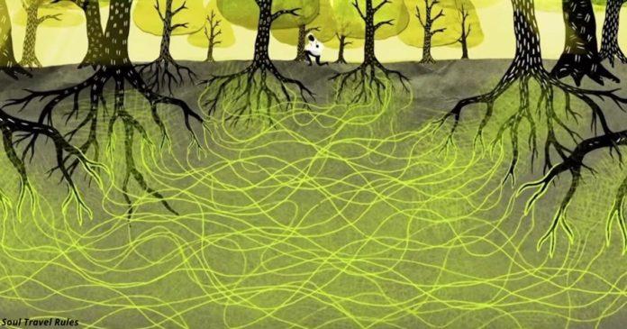 sszeölelkezni - A fák tudják, hogyan kell szeretni, összeölelkezni és akár házaspárként is gondoskodni egymásról